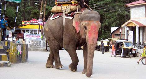 elefante nell'India del Nord