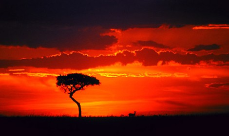 tramonto-serengeti.jpg